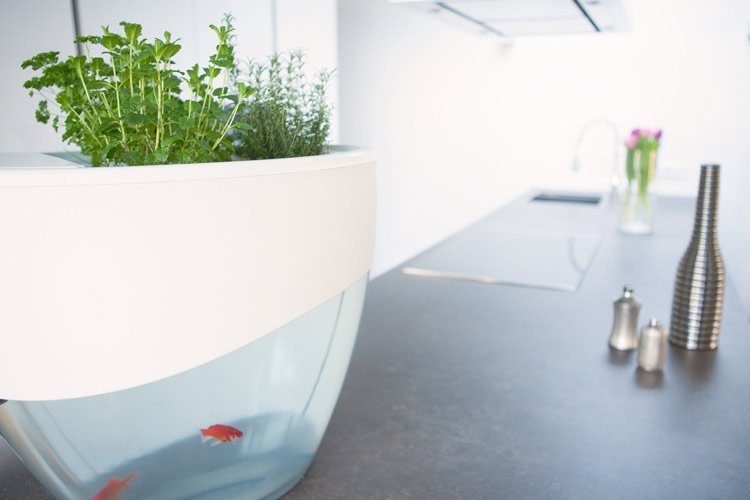 potager aquarium